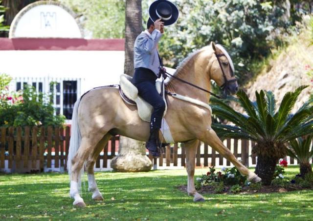 Hosting a Horse Show